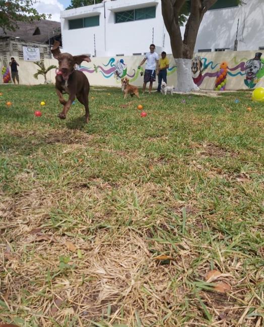 Parque para caninos