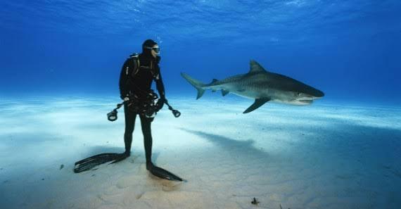 Tiburones en Cancún