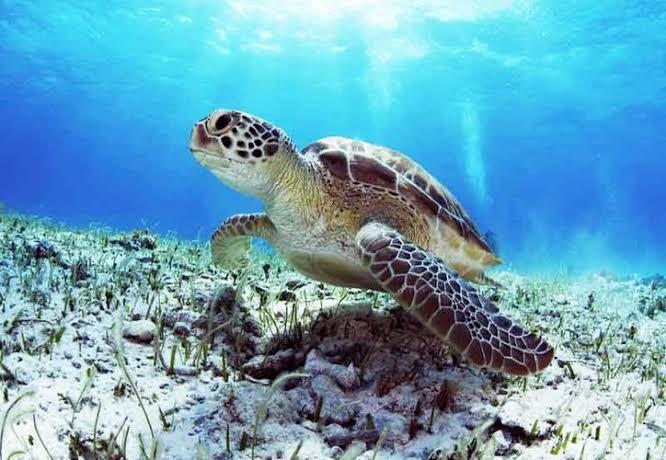Áreas Naturales de Cancún