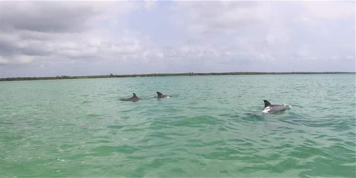 Delfines en Chetumal
