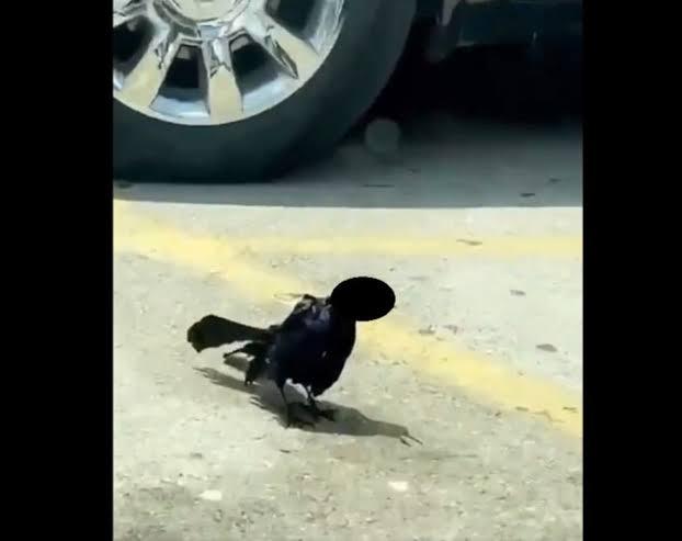 """""""Pájaro Zombie"""""""